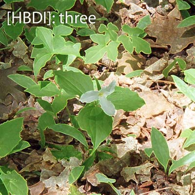 Cover of the HBDI three album